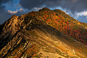 Fall Colors by Salt Lake City, Utah
