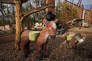Donkey in Green Valley, Arizona