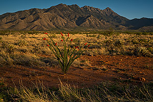 Ocotillo and Santa Rita Mountains, Arizona