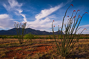 Morning at Santa Rita Mountains, Arizona