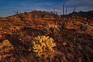 Evening at Santa Rita Mountains, Arizona