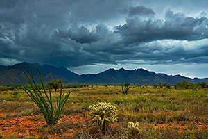 Monsoon season in Santa Rita Mountains
