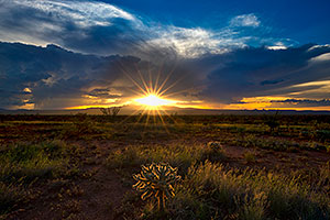 Cholla sunset in Green Valley, Arizona