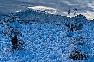 Snow on Santa Rita Mountains