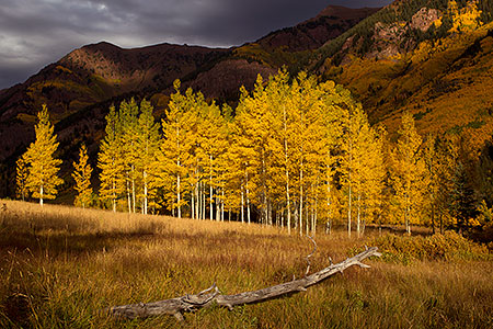 Log and yellow Aspen trees in Maroon Bells, Colorado