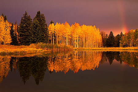 Morning fall colors reflecting in a lake, Colorado