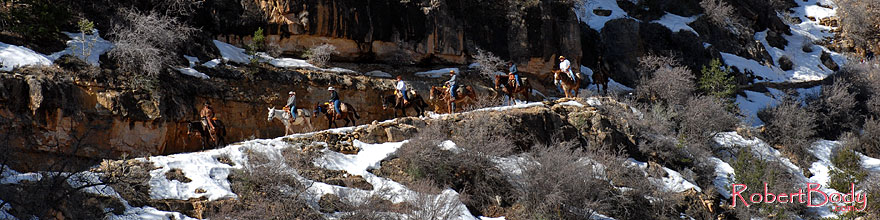 /images/500/2008-03-30-gc-ba-mul-6226sp.jpg - #04967: Mule riding group and snow spots along Bright Angel Trail in Grand Canyon … March 2008 -- Bright Angel Trail, Grand Canyon, Arizona