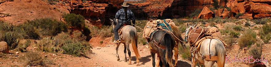 /images/500/2008-04-06-hav-can-1343sp.jpg - #05101: Mules along Havasupai Trail … April 2008 -- Havasupai Trail, Havasu Falls, Arizona