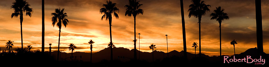 /images/500/2008-12-11-smountain-palms-61485sp.jpg - #06409: Sunset over South Mountain … December 2008 -- South Mountain, Phoenix, Arizona