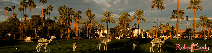 /images/500/2008-12-17-mesa-temple-caravan-64460sp.jpg - #06483: Camel caravan and Palm Trees by Mesa Arizona Temple … December 2008 -- Mesa Arizona Temple, Mesa, Arizona