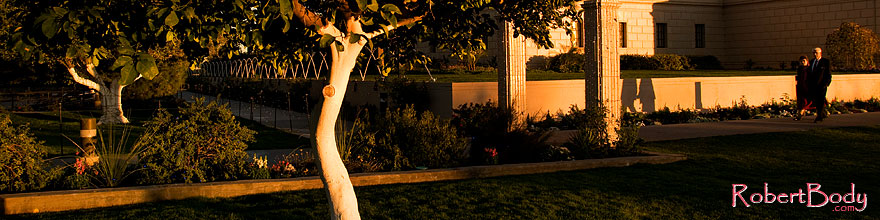 /images/500/2008-12-31-mesa-temple-trees-69854sp.jpg - #06706: Orange tree by Mesa Arizona Temple … December 2008 -- Mesa Arizona Temple, Mesa, Arizona
