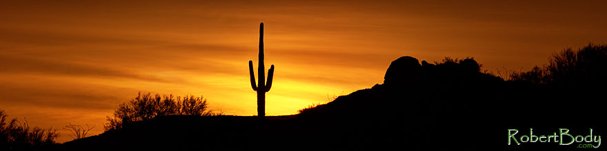/images/500/2013-05-26-supers-sun-3-4-5-1dx_2562sp.jpg - #11151: Saguaro cactus at sunrise in Superstitions … May 2013 -- Apache Trail Road, Superstitions, Arizona