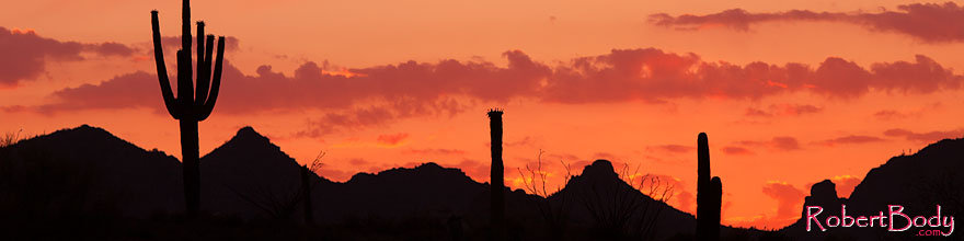 /images/500/2014-06-16-supers-sunset-5d2_7403sp.jpg - #11947: Sunset in Superstitions … June 2014 -- Sunset Cactus, Superstitions, Arizona